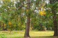 process_arbre3-890
